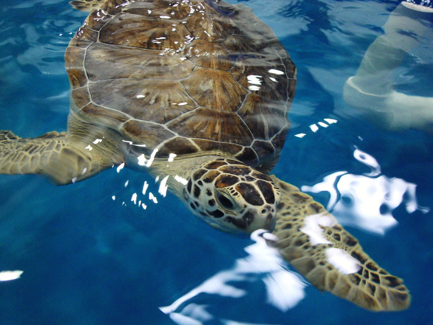 Karen Beasley Sea Turtle Rescue and Rehabilitation Center in Surf City
