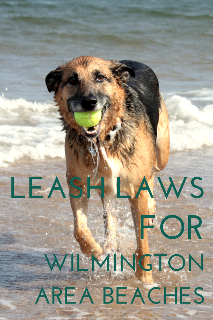 Leash Laws for Wilmington Area Beaches