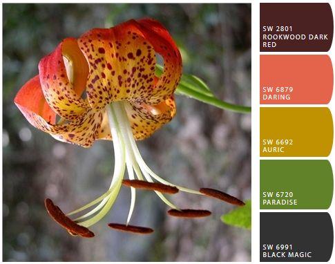 North Carolina Official Wildflower Carolina Lily