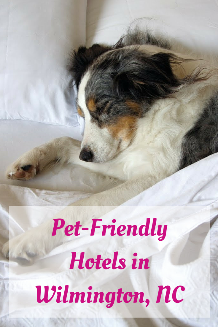 Pet-Friendly Hotels in Wilmington NC