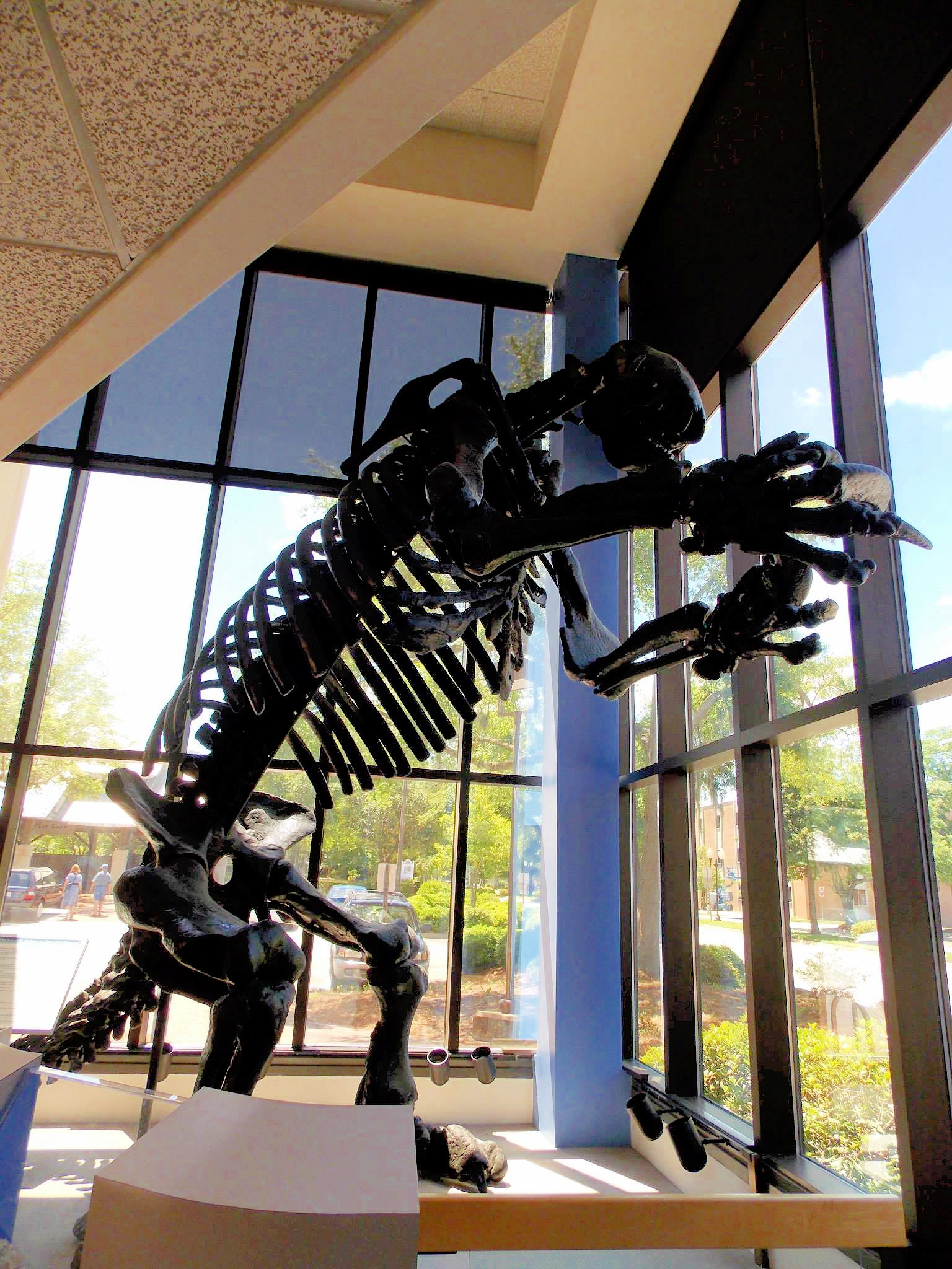 Giant Sloth - Cape Fear Museum