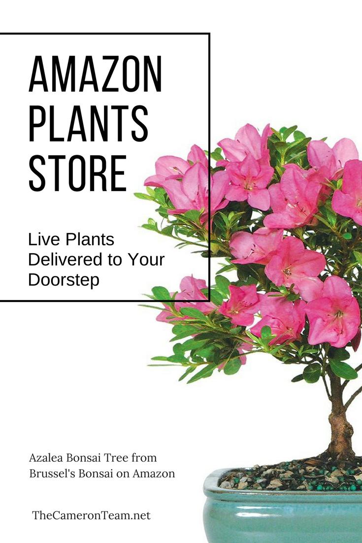 Amazon Plants Store