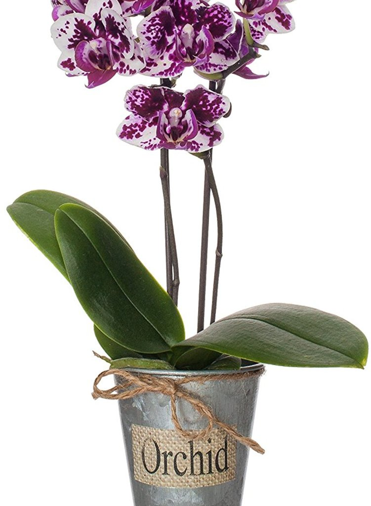 Just Add Ice Rustic Mini Orchid Tin