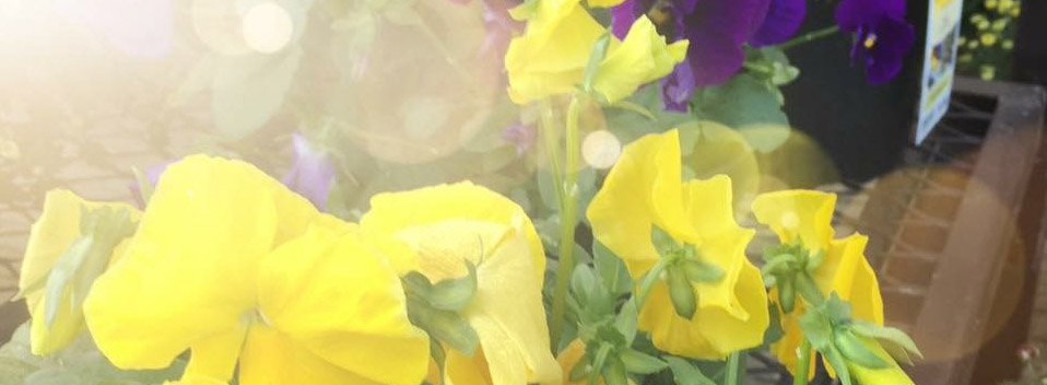 fallflowers-forblog