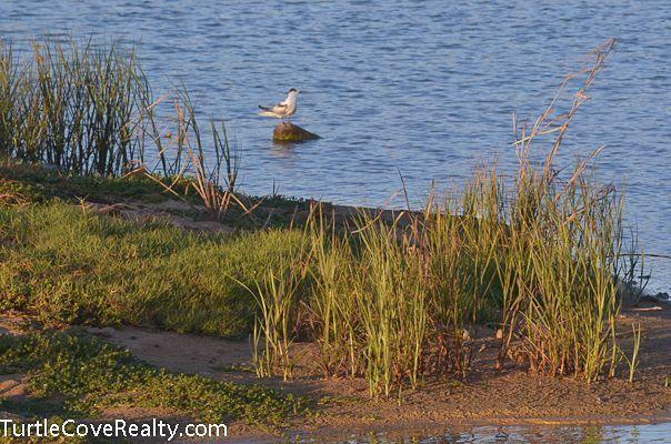 Kekaha wetland